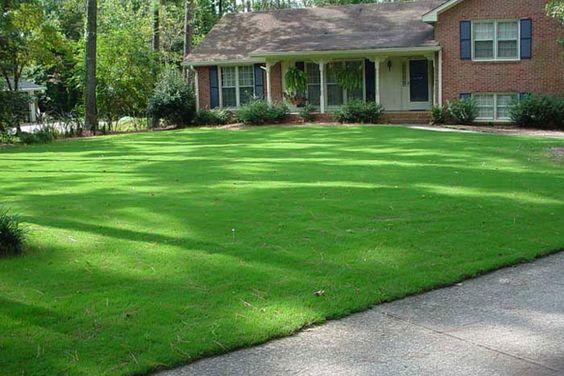 melhor tipo de grama para sua casa